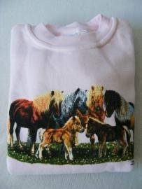 sweater met shetlanders DN040 maat 116