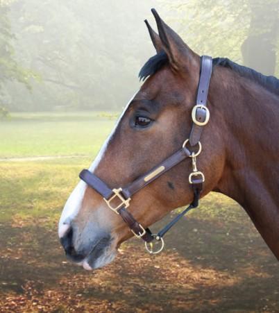 paardenhoofd.jpg