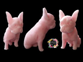 Franse Bulldog  3D mal