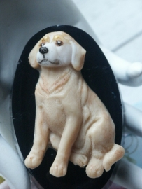 Golden Retreiver mold