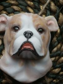 Boxer mold