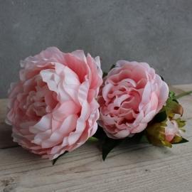 Pioen Roos  Pink