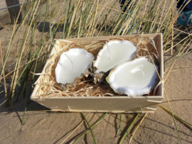 Nieuw Oyster Candles