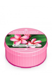 Blooming Plumeria Country Candle  Daylight
