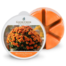 Blooming Harvest Goose Creek Candle 1 Wax Melt blokje
