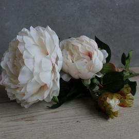 Pioen Roos Soft pink 75x25cm