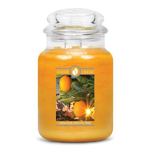 Orange Grove Tree  Goose Creek Candle Large 150 Branduren
