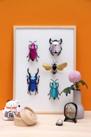 Assembli 3D Stag beetle (2 kleuren)