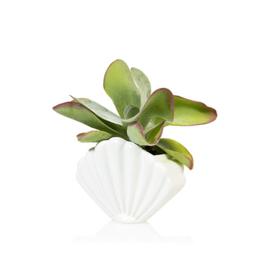 Shell white small planter