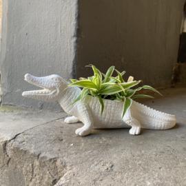 Krokodil plantenpot