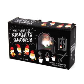 Mini garden naughty  gnomes
