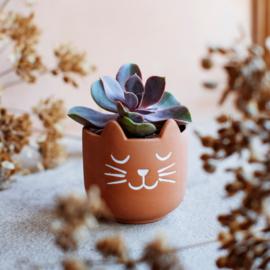 Mini plantenpot kat terracotta