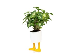 Duck feet planter L