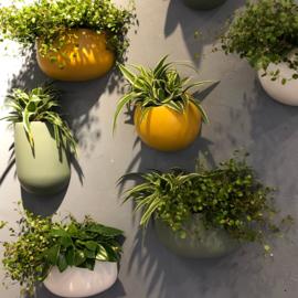 PT wand plantenpot Globe (2 kleuren)