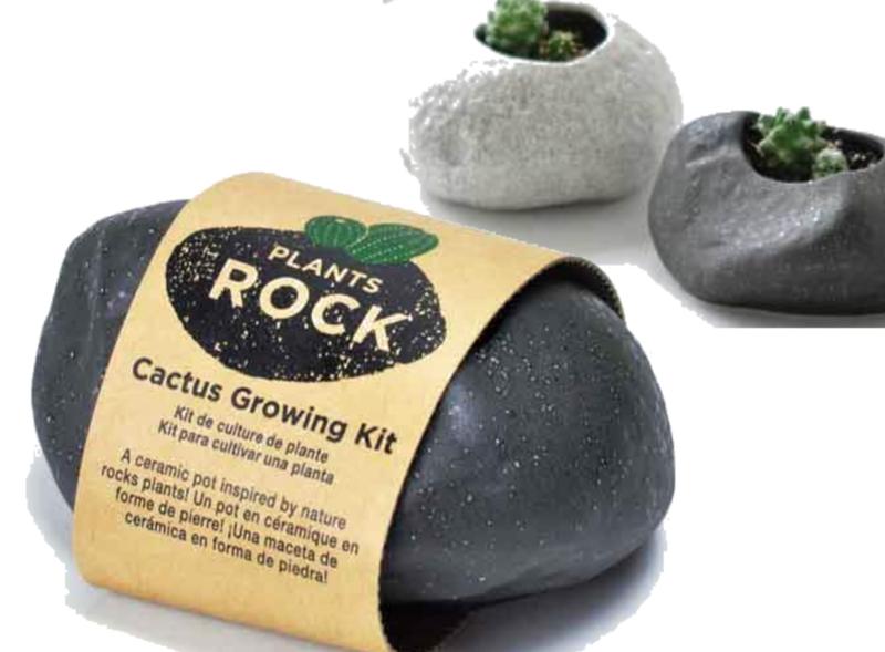 Plants rock cactus