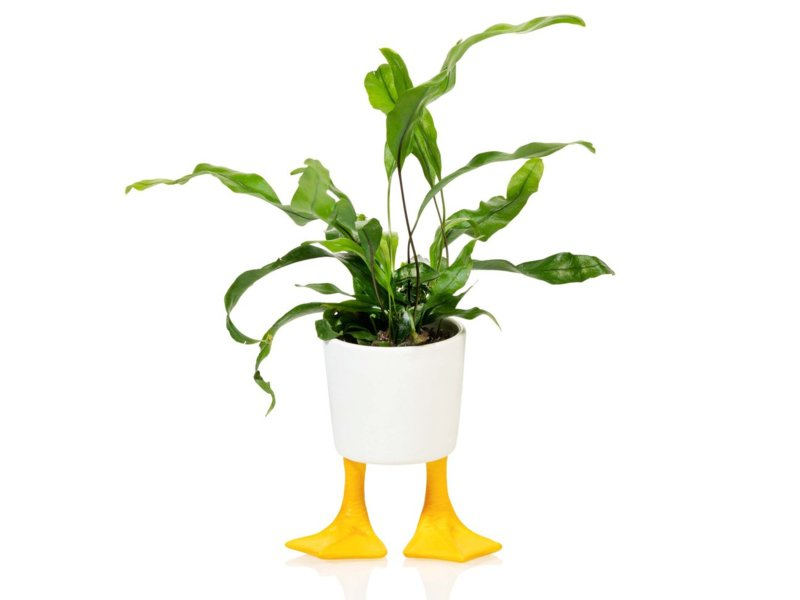 Duck feet planter S