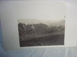 Postkaart foto regiment chasseur de Afrique.Koloniale soldaat met tropenhelm.