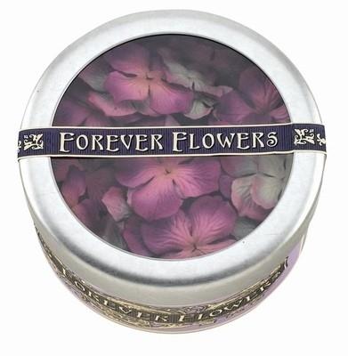 Primaflowers set 41: hydrangea glam grape * 10 bloemen