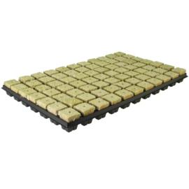 Stekplug 77 stuks per tray