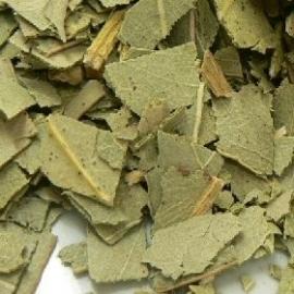 Eucalyptusblad (biologisch)