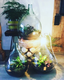 Workshop Ecosysteem/flessentuin