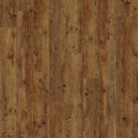 Maritime Pine - 24854