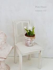 Witte roosjes in Pot