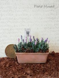 Verweerde Plantenbak met Lavendel.