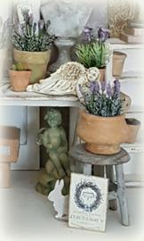 Ronde Bolle Pot met Lavendel