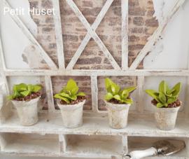 Geheel Handgemaakt Plantje in Pot