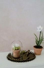 Plantje Onder Stolp op Dienblad-SOLD