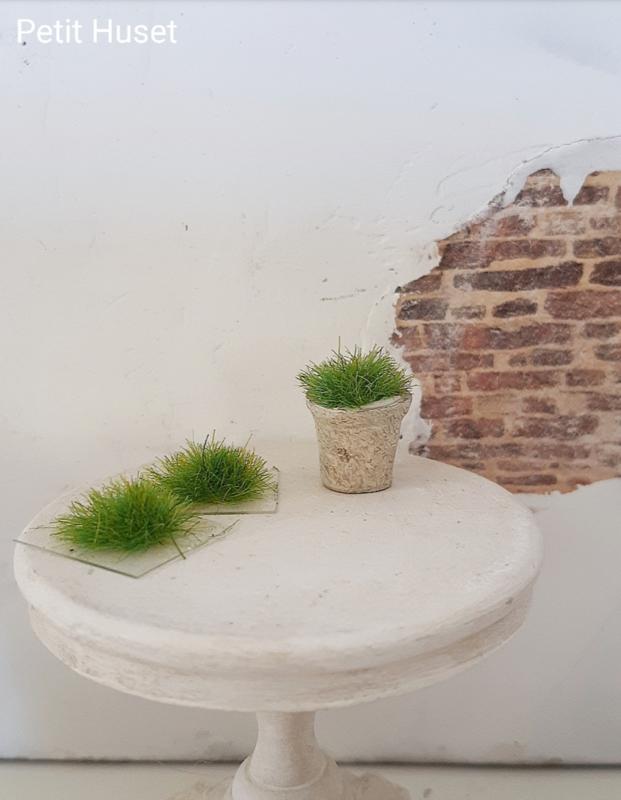 Planten Polletje