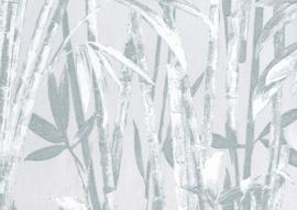 22123 - Canne Bambu
