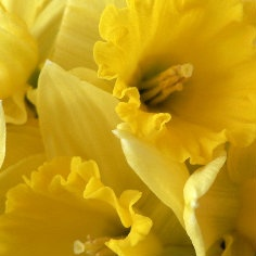 Geel en goud - Alle tinten geel naar goud
