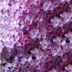 Paars Lila - Alle tinten paars naar lila