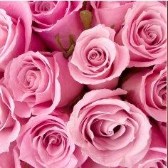 Roze - alle tinten van roze - fucshia