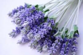 Gedroogde lavendel
