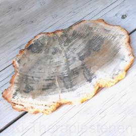 Versteend hout, schijf 17,5 bij 12 cm