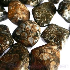 Jaspis: Turitella  jaspis trommelsteen XL (gem. ca 30 gr.) p.st.*