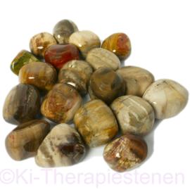 Versteend hout trommelsteen (L) per st.*
