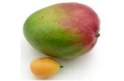 Mango Abrikozen Bavarois