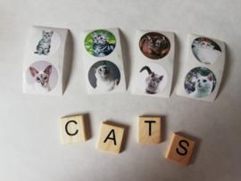 Cadeausticker Katten