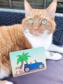 Jamie the Cat Zomer 2021 ansichtkaart