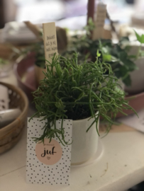 Potje met mini plantje