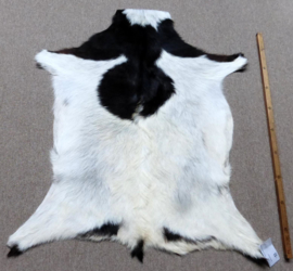 Goatskin (80)