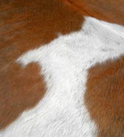Bruin-Witte Koeienhuiden