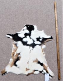 Goatskin (16)