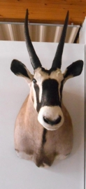 Gemsbok/Oryx Head Mount