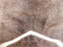 Waterbok Huid (1)
