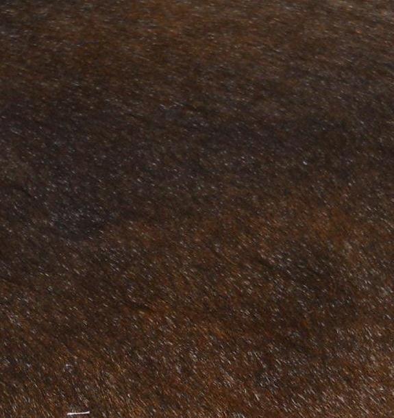 koeienhuid-bruin.jpg